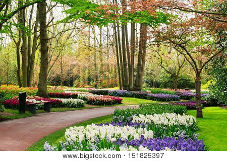 Colourful Hyacinth and Tulips Flowerbeds and Pathway in an Spring Formal Garden