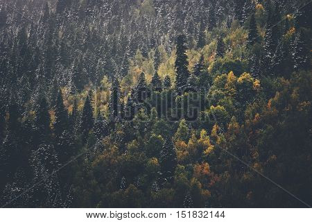 Coniferous Forest Landscape aerial view background Travel serene scenic view moody weather autumn season