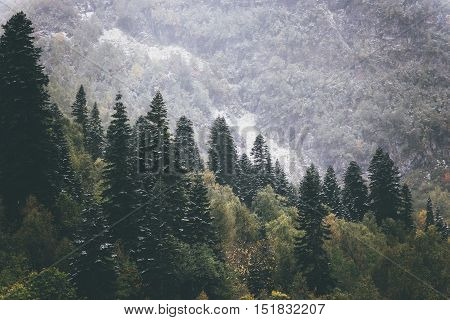 Coniferous Forest Landscape in mountains aerial view Travel serene scenic view moody weather