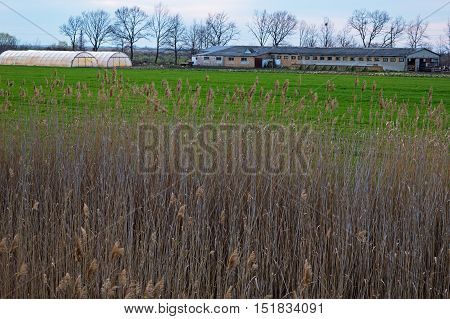 Bulrush in front of Farmstead and greenhouse. Blue sky. Green grass. Trees behind. Farm Building