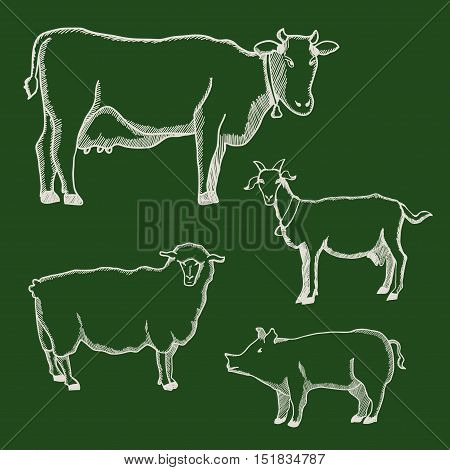 Hand drawn illustration of cow, pig, goat and sheep