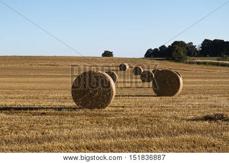 Bales of straw on a corn field