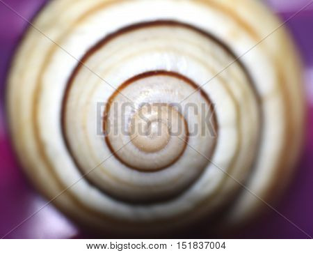 Beautiful colored pearl shell close-up / macro photo with selective focus in center of photo