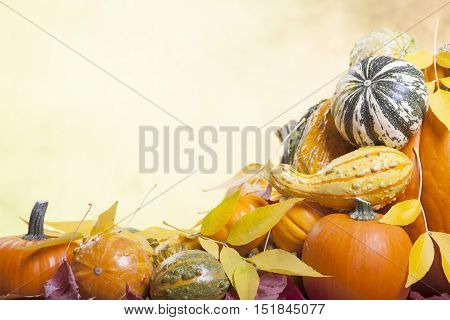 Assorted Pumpkins Gourds and Squash on a Blurred Autumn Background with Leaves