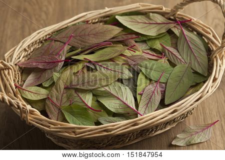 Basket with fresh raw amaranth leaves