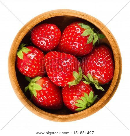Garden Strawberries in a wooden bowl on white background. Fresh ripe bright red fruits of Fragaria ananassa. Edible, raw, organic and vegan food. Isolated macro photo close up from above.