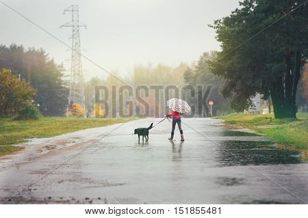 The girl in a red jacket with an umbrella goes through the puddles with her dog in the rain