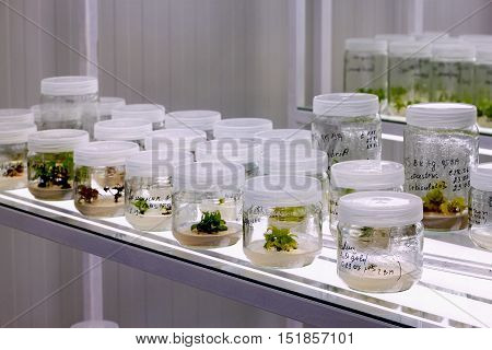 Meristem tissue culture laboratory for plant growing.