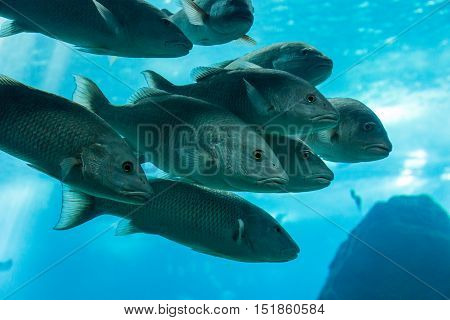 Fish In Oceanarium In Blue Depth Water