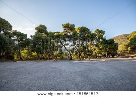 Large oak trees in row behind the road in Greece