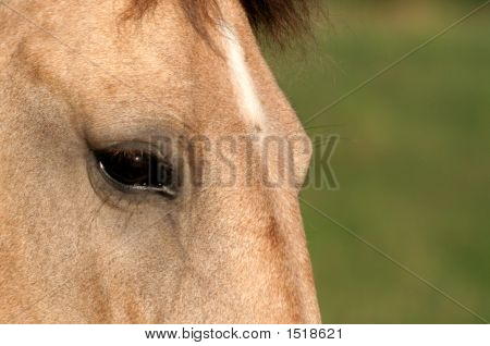 Buckskin Eye