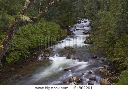 Fast flowing waters of the Rio Ventisquero as it passes through lush forest near the Carretera Austral in the Aysen Region of southern Chile.