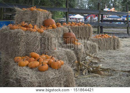 variety of pumpkins set on bales of hay