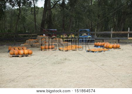 Pumpkins set on wooden bales of hay  and train for kids for activities in the farm