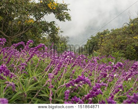 Colorful flowers and fog on the slopes of the mountains surrounding Bogota