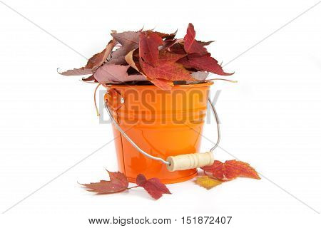 Fall and end of season yard work concept of colorful foliage gathered in a yellow bucket
