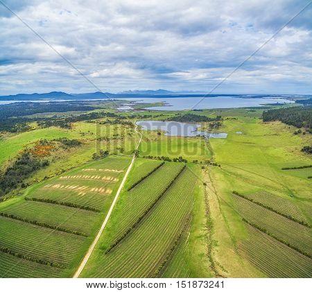 Devil's Corner Winery Aerial View