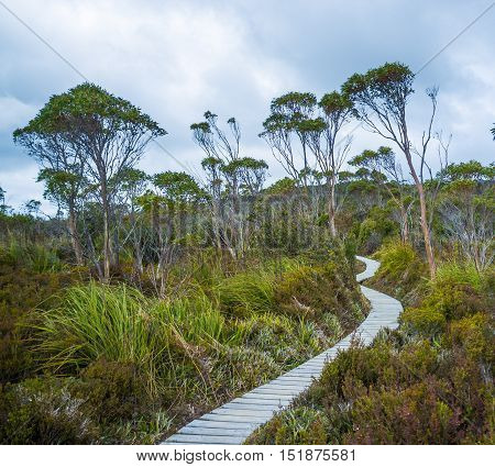 Winding Boardwalk Among Native Vegetation In Hartz Mountains National Park, Tasmania