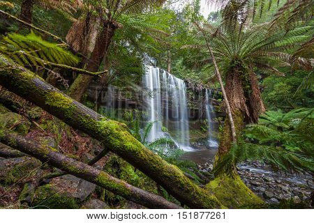Russel Falls In Lush Rainforest. Mount Field National Park, Tasmania