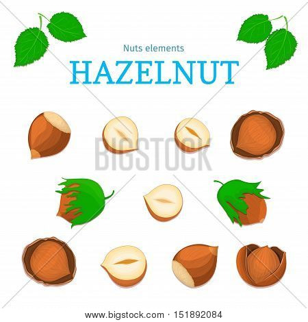 Vector set of nuts. Hazelnut nut fruit, whole, peeled, piece of half, walnut in shell, leaves. Collection of walnut nuts designer elements for use in packaging design projects flyer healthy eating