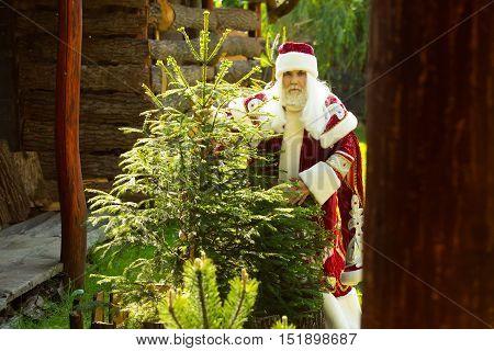 Serious Santa Near Christmas Tree