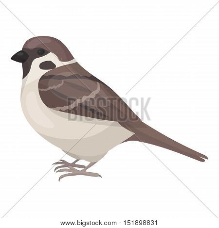 Sparrow icon in cartoon style isolated on white background. Bird symbol vector illustration.