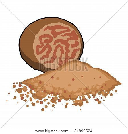 Nutmeg icon in cartoon style isolated on white background. Herb an spices symbol vector illustration.