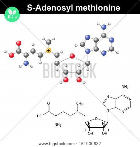 S-adenosyl methionine coenzyme molecular formula bio molecule structure 2d and 3d vector illustration isolated on white background eps 8