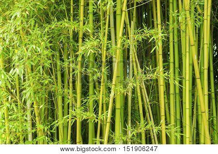 a full frame green background vegetation detail