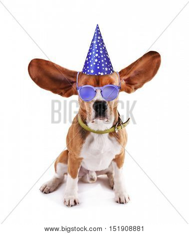 Beagle dog in stylish sunglasses and party hat isolated on white