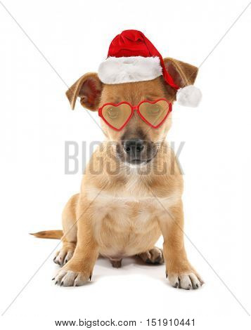 Funny puppy in stylish sunglasses and Santa Claus hat isolated on white