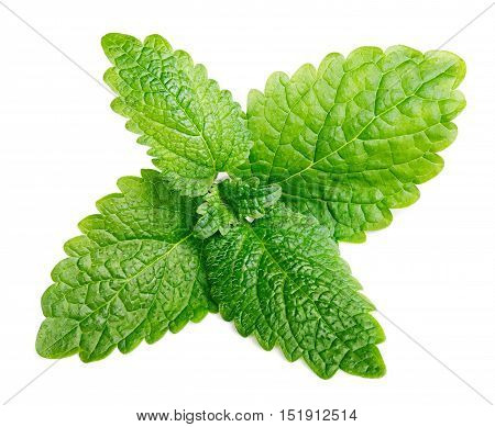 Fresh Raw Mint Or Green Lemon Balm Leaves (melissa Officinalis) On White