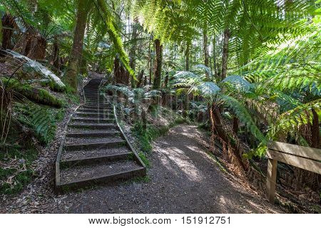 Wooden Stairs And Signpost In Jungle Australian Rainforest.