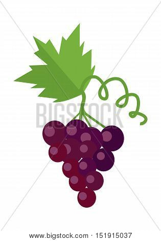 Bunch of red wine grape with green leaves. Fresh fruit. Vineyard grape icon. Red grape icon. Wine grape icon. Isolated object in flat design on white background. Vector illustration.