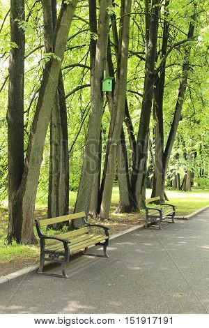 Moscow, Two benches under the trees in Sparrow Hills