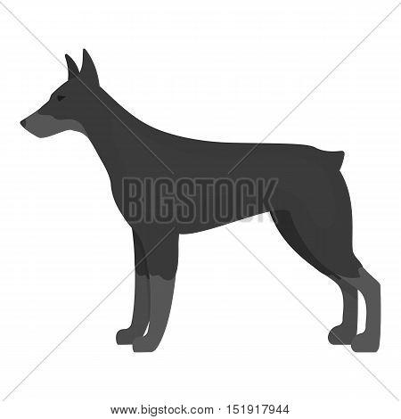 Doberman vector illustration icon in monochrome design