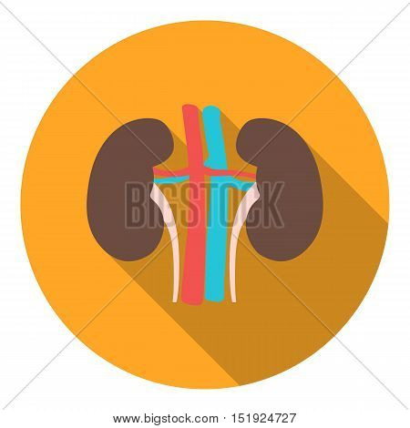 Kidney icon in flat style isolated on white background. Organs symbol vector illustration.