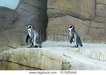 Penguin at the zoo Cyprus photo for you