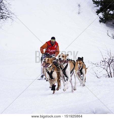 SARDIERES VANOISE FRANCE - JANUARY 20 2016 - the GRANDE ODYSSEE the hardest mushers race in savoie Mont-Blanc Remy COSTE French musher Vanoise Alps