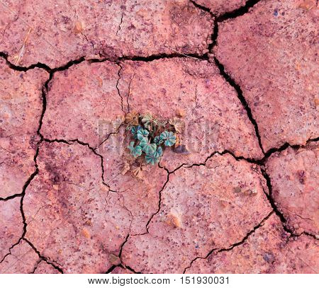 green sprout in dried red earth. view from above