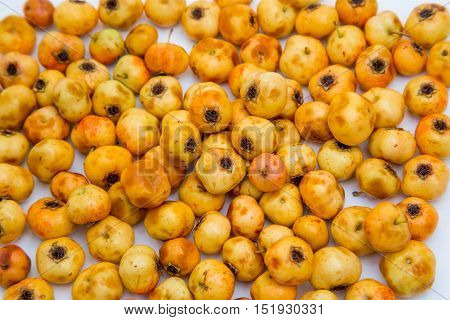 many yellow fruits of hawthorn on a white background