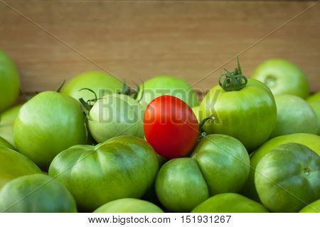 Tomatoes. One Red Ripe Tomato On Immature Tomatoes, Copyspace. Red And Green Tomatoes. Selective Focus.