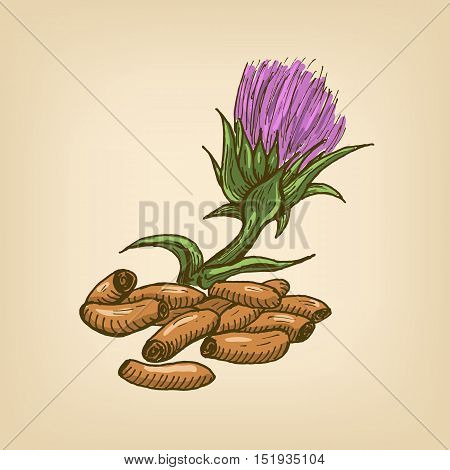 Seeds of a Milk Thistle with flower. Vector illustration. Hand drawn illustration.