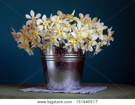 Bouquet of daffodils in a bucket with water droplets. Still life with flowers on a blue background.