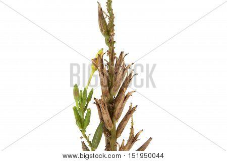 Plant Stalk
