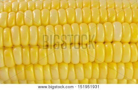 yellow corn background , texture yellow corn