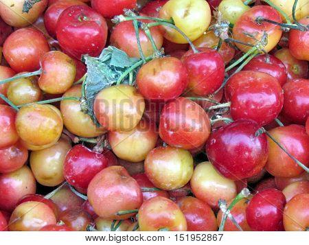 Cherry fruits on bazaar in Tel Aviv Israel June 6 2012