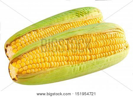 Ripe corn the cob  on white background