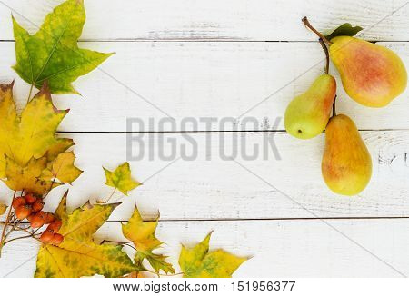 Autumn colors: yellow leaves orange berries fragrant pears arranged in a frame in the middle of an empty space for your inscription. On a white wooden background. The top view.
