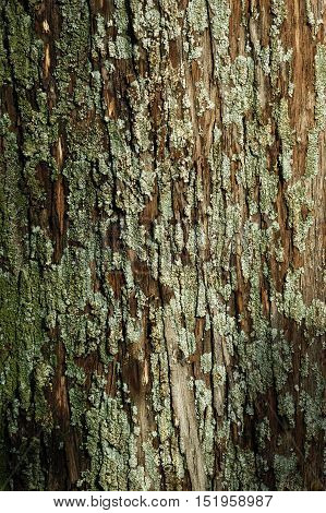 The bark of a tree, covered with moss